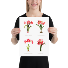Flowers Museum Poster – Lilies (No Frame)