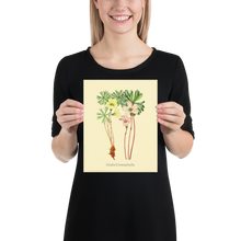 Flowers Museum Poster - Oxalis Enneaphylla (No Frame)