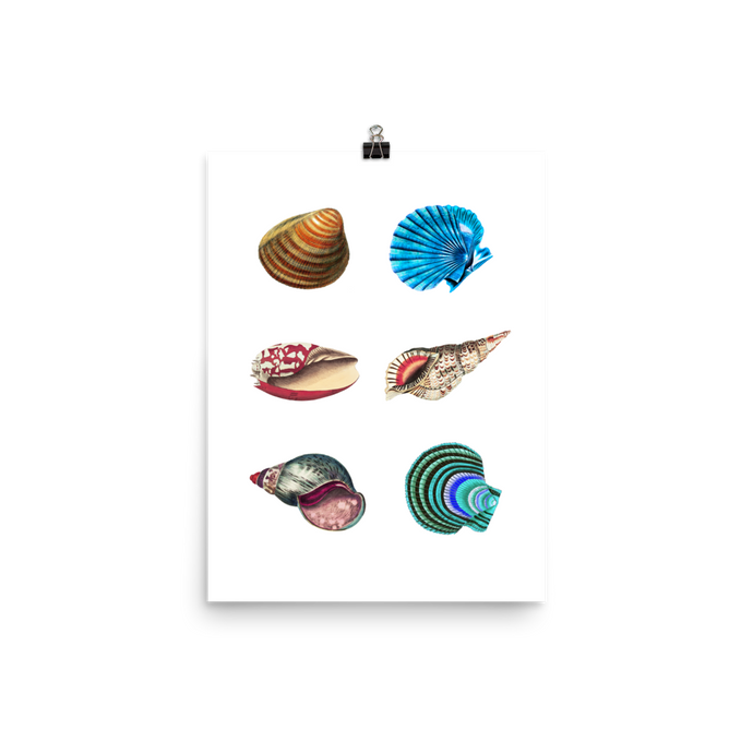 Under the Sea Museum Poster – Sea Shells (No Frame)
