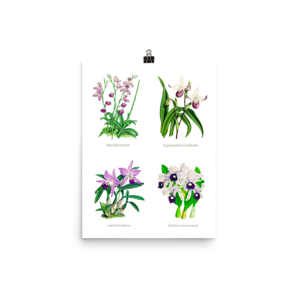 Flowers Museum Poster – Orchids (No Frame)