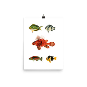 Under the Sea Museum Poster – Fish (No Frame)