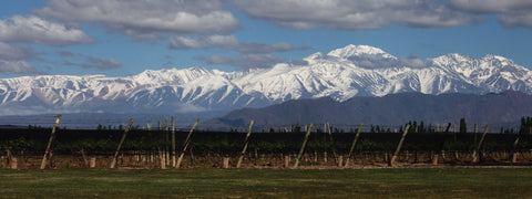 High Altitude Vineyards at the foot of the Andes