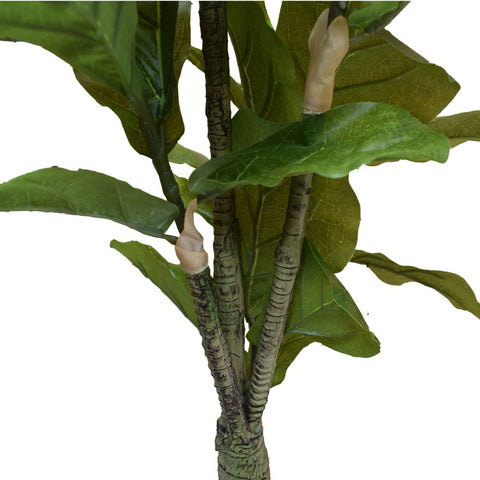 Fiddle Fig - 130cm
