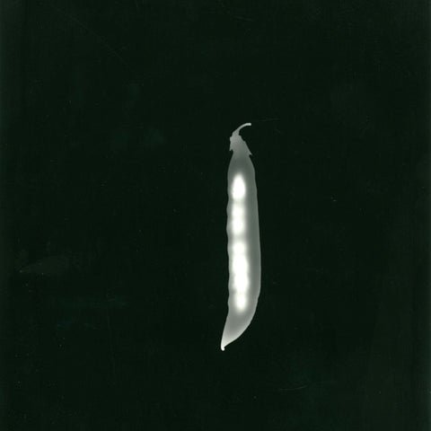 photogram - snow pea