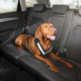 Safety harness for dogs. Small
