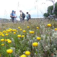 Hike the Razorback - Hotham to Harrietville