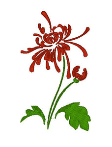 Chrysanthemum - red