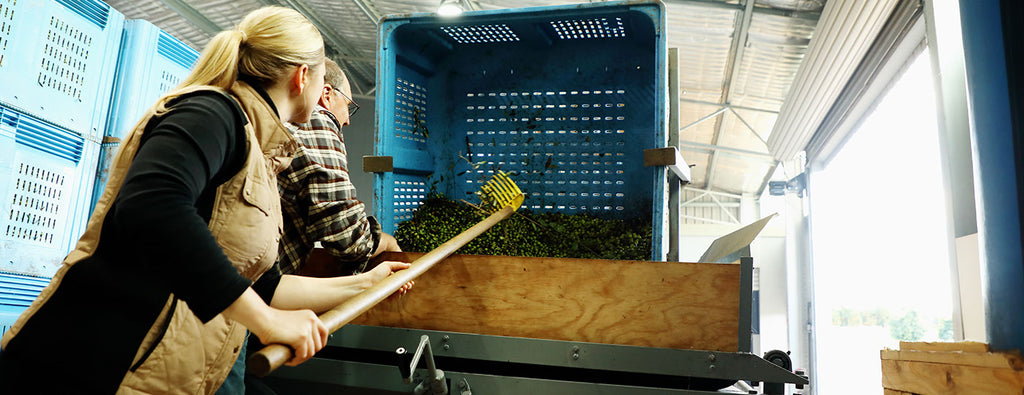 processing extra virgin olive oil