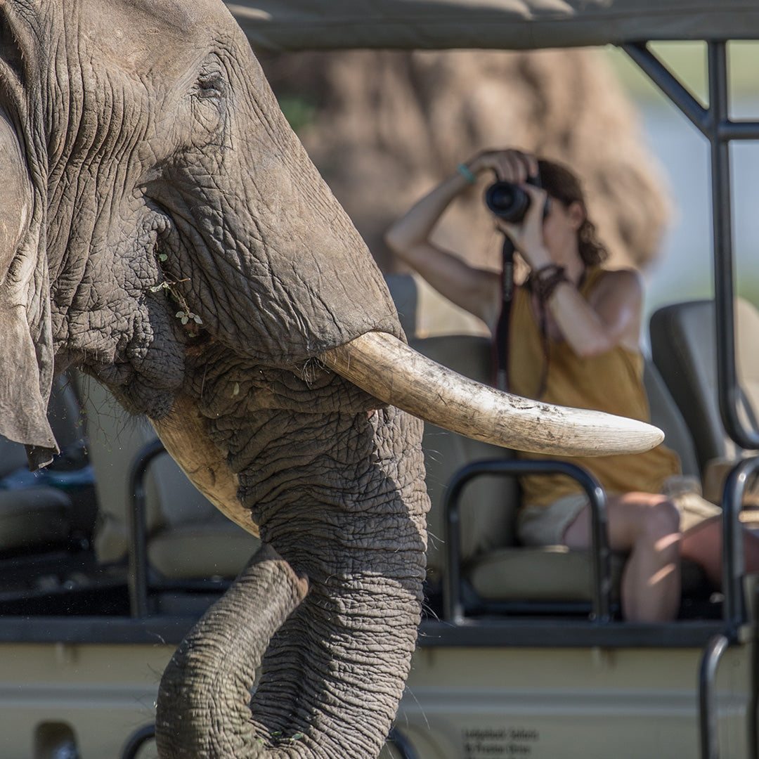 Elephant, Mana Pools, African Bush Camps and Dusty Boots Travel