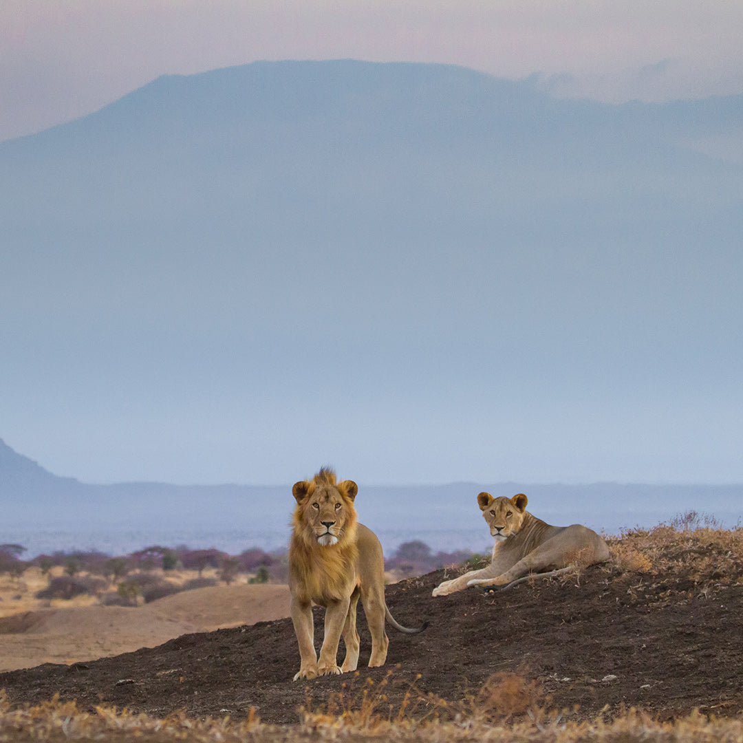 8 nights Premier Kenyan Safari - ol Donyo & Mara Plains