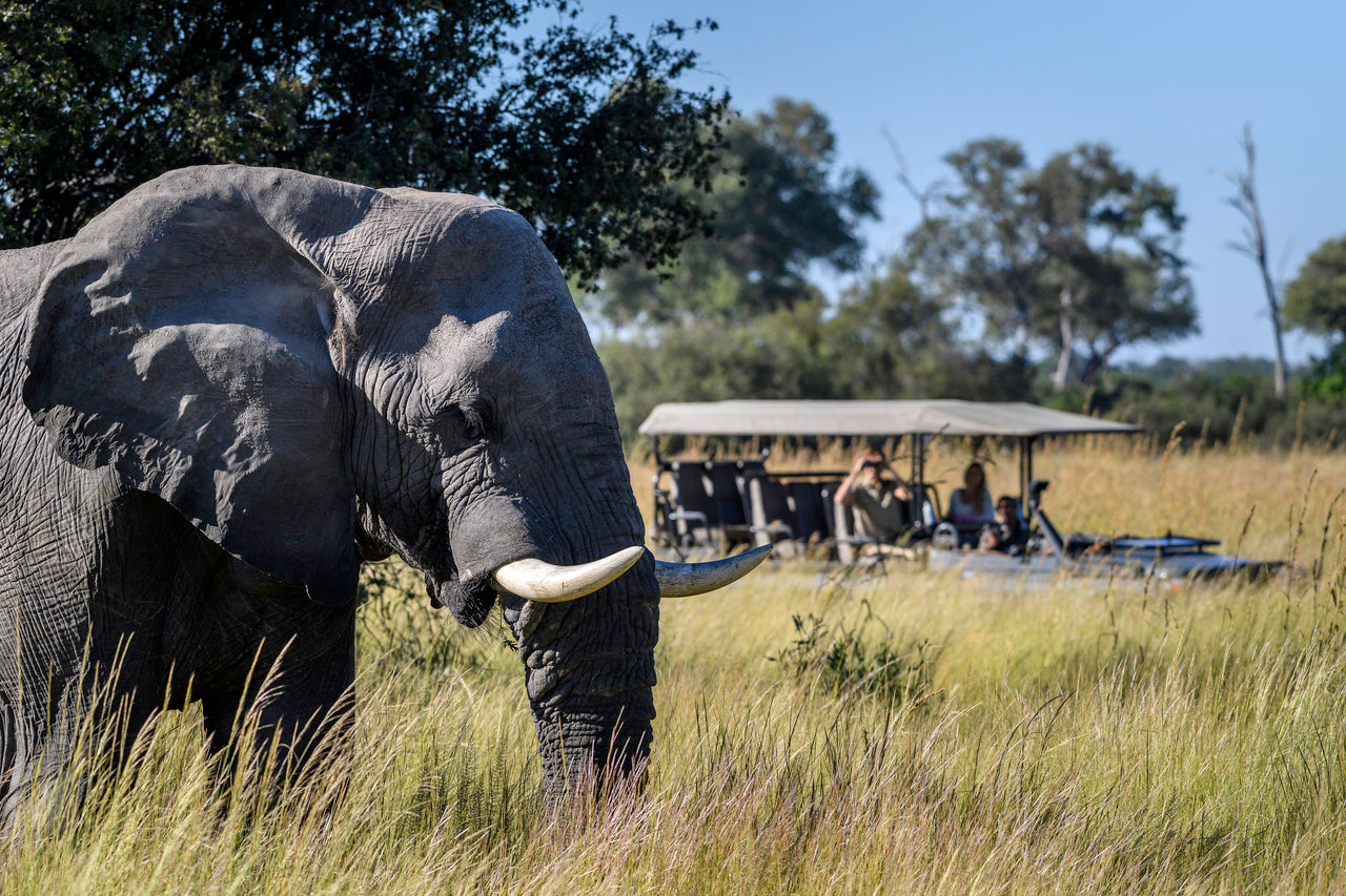 6 night Botswana Safari - Little Vumbura - DumaTau