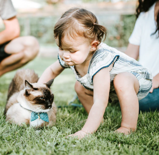 9 ways of introducing your cat to a new baby!