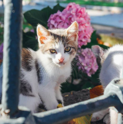 Gardening with Cats: 8 different ways to Create A Pet-Friendly Garden?