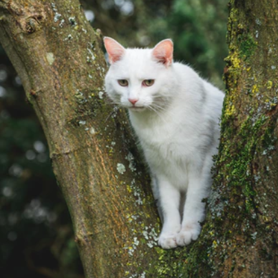 Why do cats get stuck in the trees and what you can do when it happens?