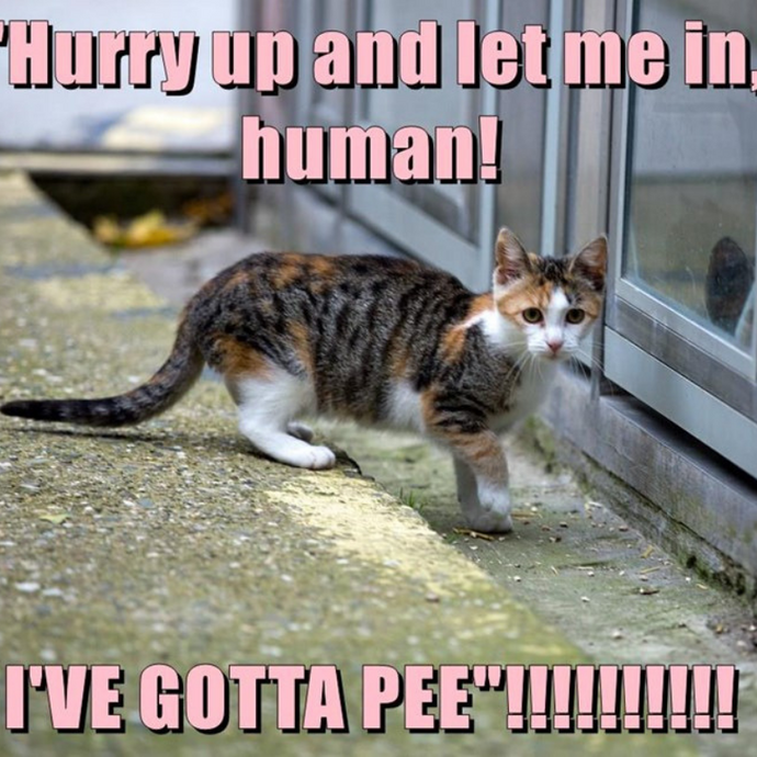 How often do cats pee & all you need to know about a cat's litterbox habits.