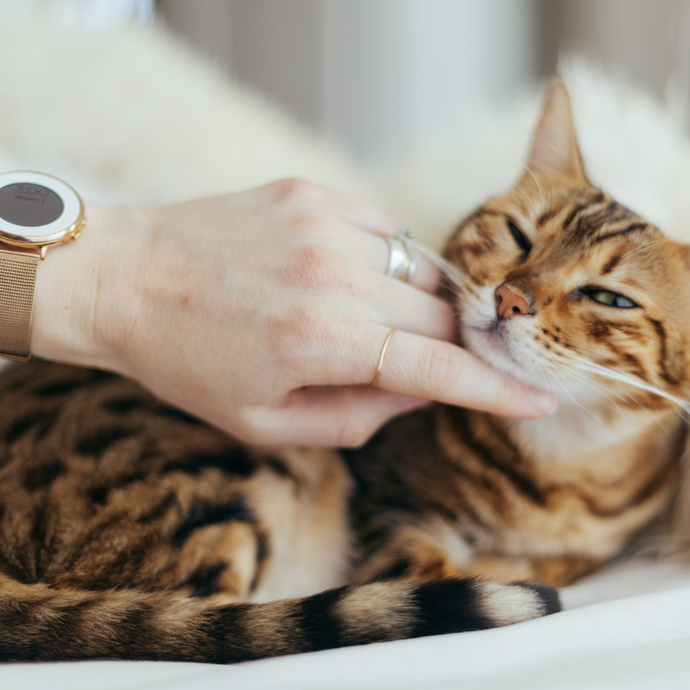 10 perfect gift ideas for your cat-lover friend.