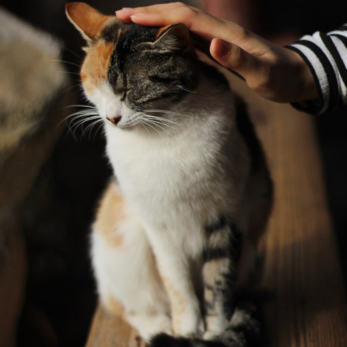 Have You Been Petting Your Cat Wrong?