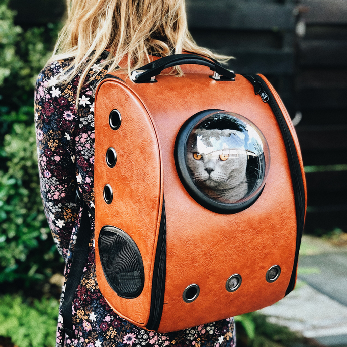 10 reasons why you should be that crazy cat lady!