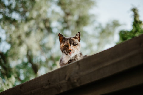 Outdoor cat on roof