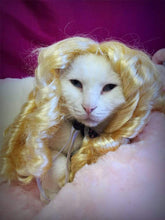 Load image into Gallery viewer, Funny Cat Wigs Costume Collection