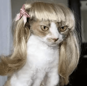 Funny Cat Wigs Costume Collection