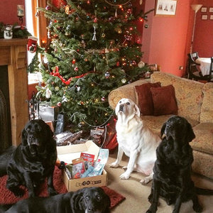 Doggy Christmas Hamper Ultimate Lite