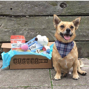 BusterBox Doggy Gift Voucher