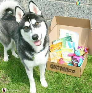 BusterBox Best Friend Subscription - 12 Month