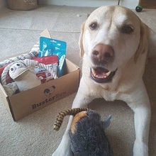 BusterBox Best Friend Christmas Subscription - 12 Month