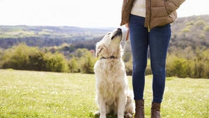 Dog Socialisation and Obedience Masterclass