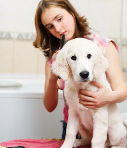 Ultimate Guide to Dog Grooming