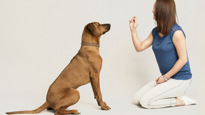 Animal Training & Pet Sitting