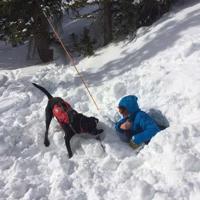 Ambassador Maria Schultz Testing Grip Trex Dog Boots with Riley