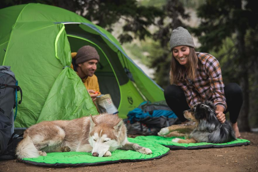 How to Camp with your dog