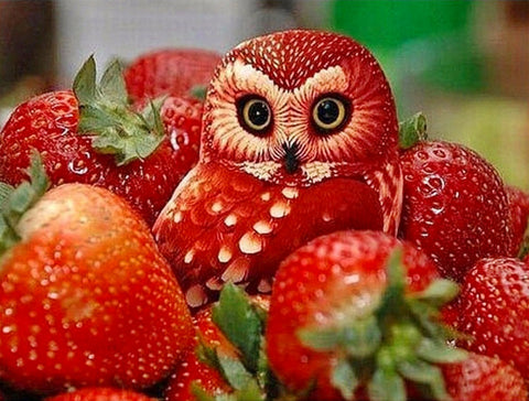 Diamond Embroidery Strawberry Owl