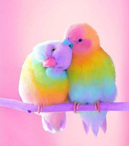 Cute Little Colorful Bird Diamond Painting