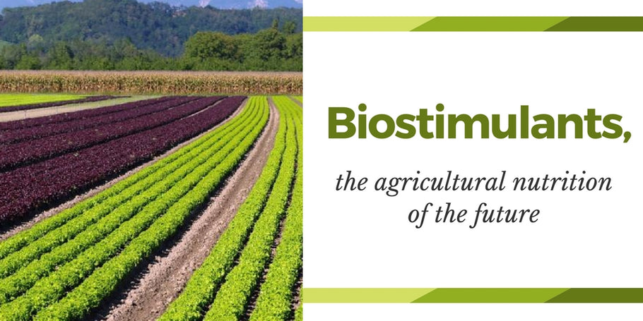 Biostimulants, the agricultural nutrition of the future
