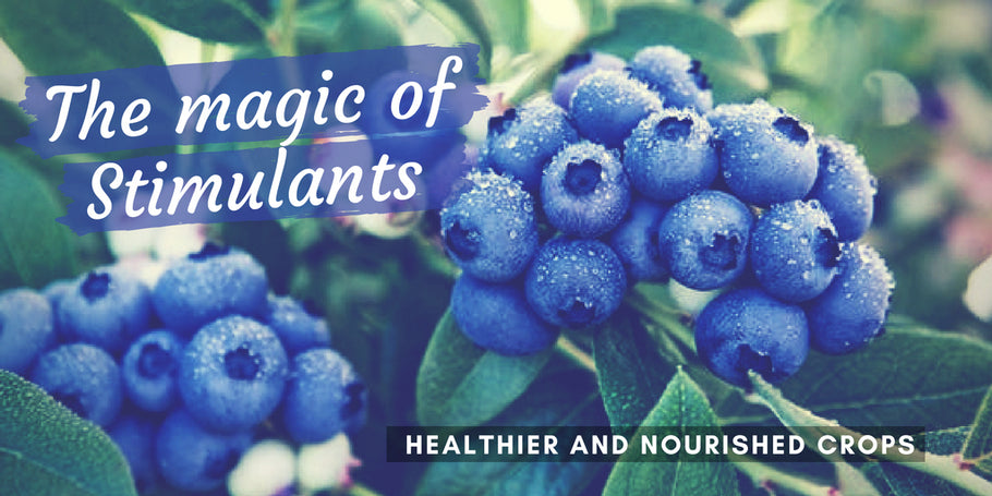 The magic of Stimulants: healthier and nourished crops