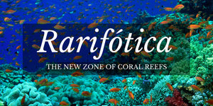 world oceans day, oceans, biology, reefs, rarifotica