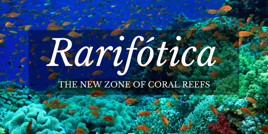 Rarifótica, a new zone of Coral Reefs