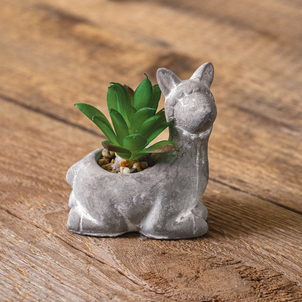 Dolly Planter with Succulent - Set of 2