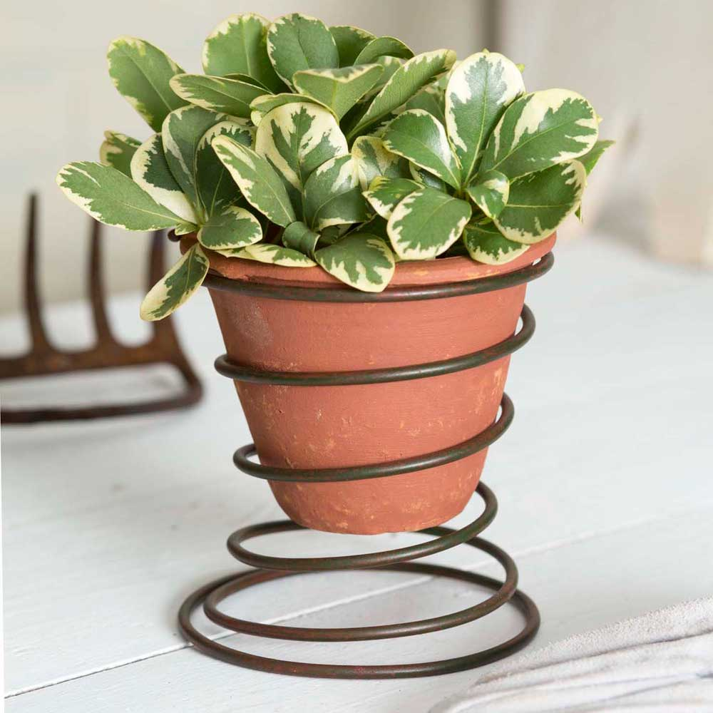 Oil Rubbed Bronze Spring Caddy with Terra Cotta Pot - Set of 2