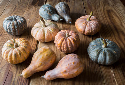 Gathered Pumpkin Gourd Collection