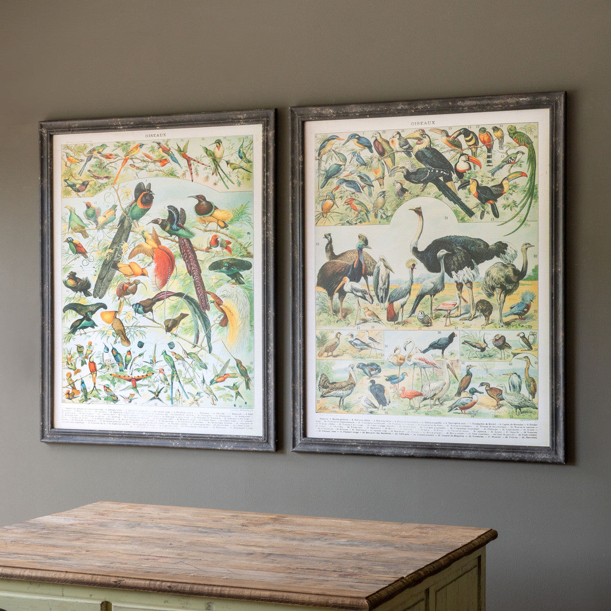 Vintage Birds Prints - Set of 2 Assorted Styles