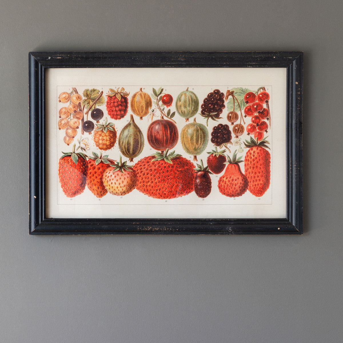 Berry Botanical Study Framed Print