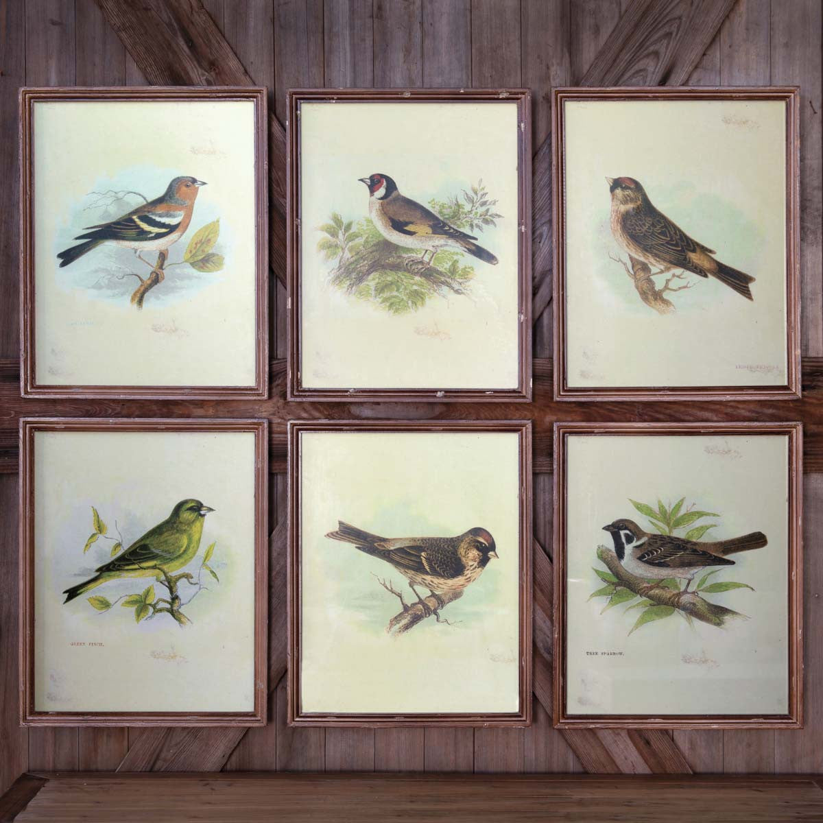 Vintage Bird Framed Prints - Set of 6