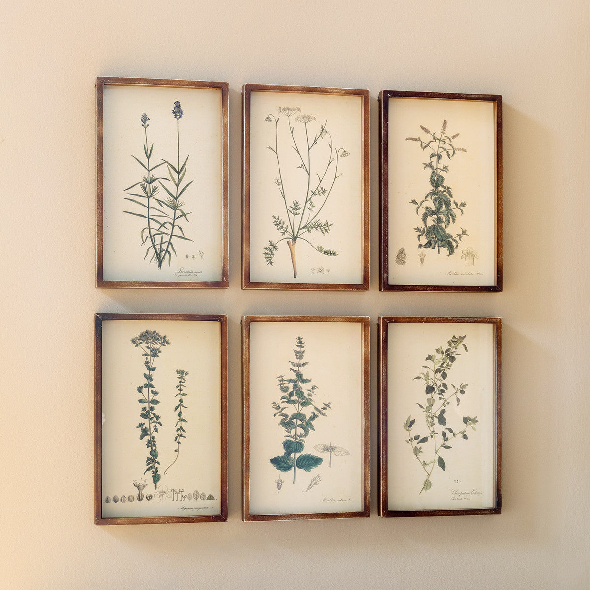 Collected Botanical Framed Prints - Set of 6