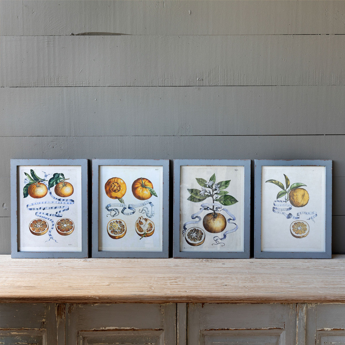 Citrus & Ribbon Framed Prints - Set of 4 Assorted Styles