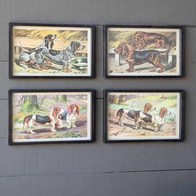 Short Hound Framed Prints - 4 Assorted Styles