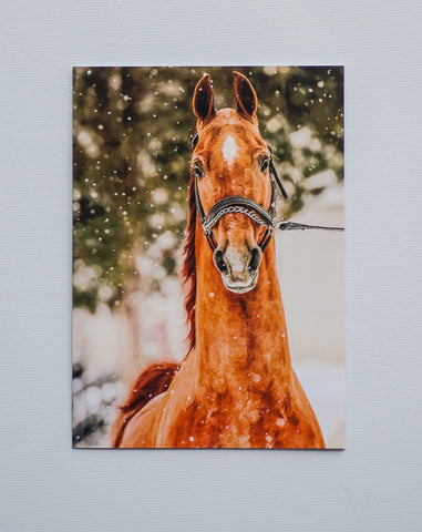 American Saddlebred Museum Holiday Card Horse in Snow